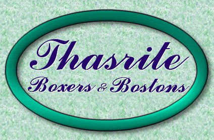 Welcome to Thasrite Boxers and Bostons